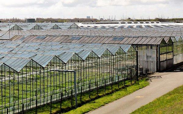 Website laten maken in Zuid-holland